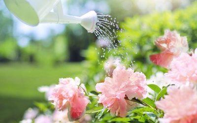 watering-2389940_1920